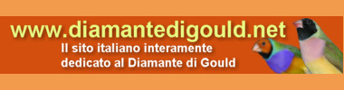 Forum Diamante di Gould